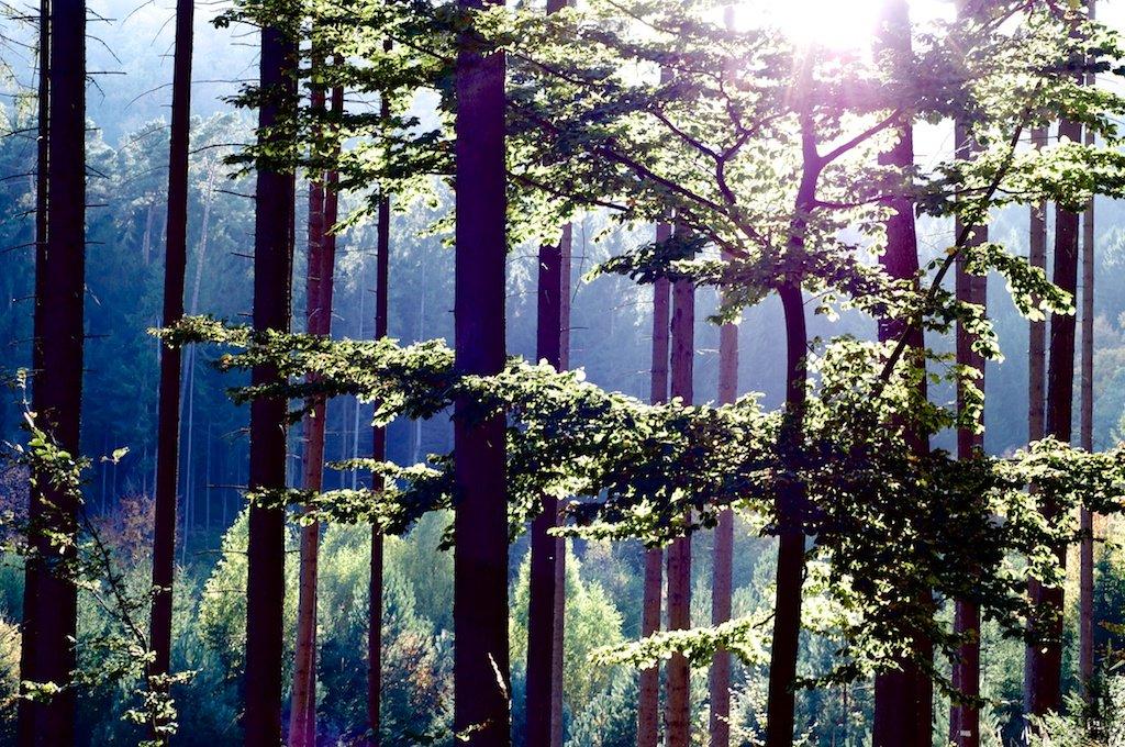 Bäume |Trees